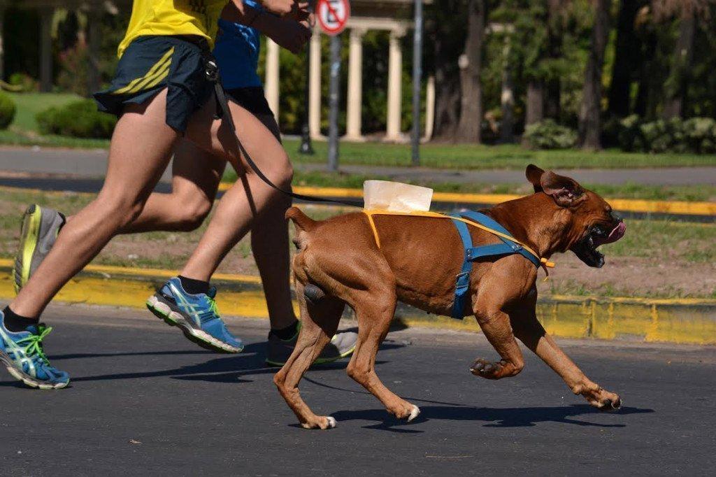 Rosario vuelve a correr con sus mascotas: llega la segunda edición de Revolution DogRun Eukanuba Rosario 2014