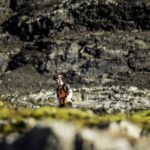 Ushuaia Trail Race fue todo un éxito