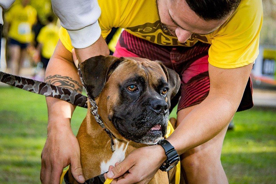 DogRun Comfortis 2017 presentada por mascotas de la ciudad
