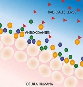 sportgen_radicales_libres_antioxidante_celulares